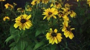flowers at brookwood1